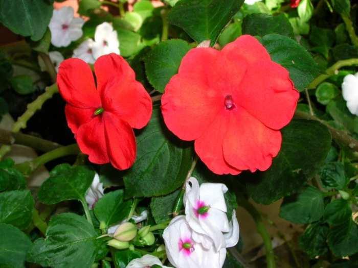 alegria del hogar Plantas fáciles de Cuidar