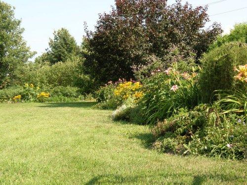 Tipos de c sped cual elegir for Tipos de cesped para jardin