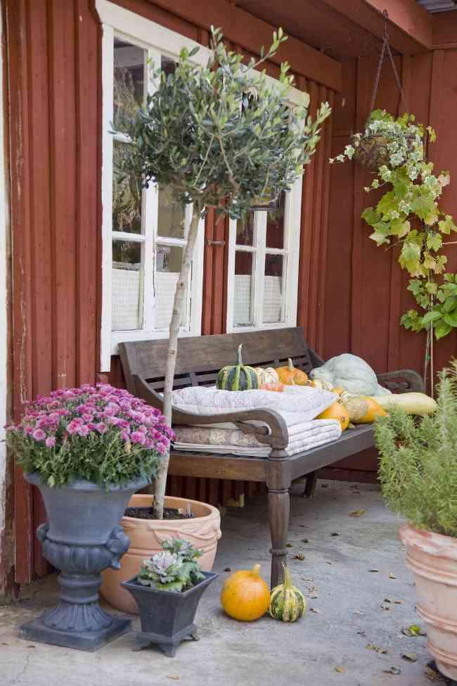 C mo crear un jard n privado primera parte for Como hacer un jardin