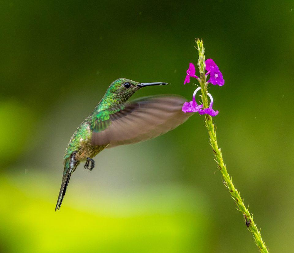 cómo atraer colibries