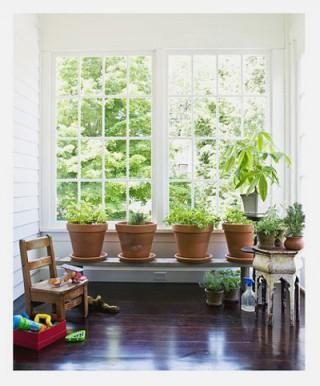 Plantas de interior recomendaciones y cuidados - Cuidados plantas interior ...