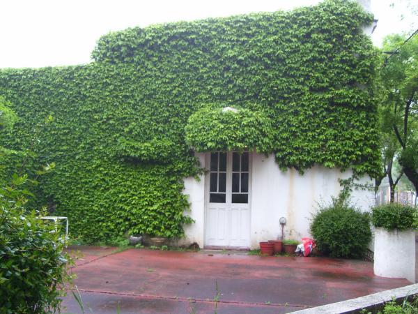 Crecimiento r pido de las trepadoras for Fachadas con plantas trepadoras