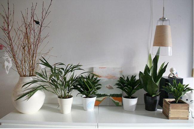 Consejos para el cuidado de las plantas de interior for Plantas de interior limpian aire