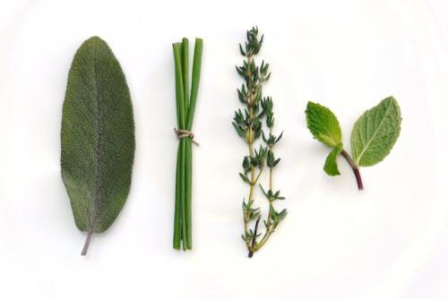 hierbas aromáticas más utilizadas