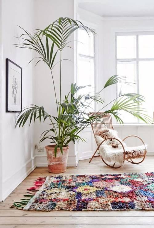 cuidar-plantas-en-casa