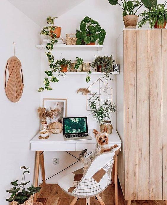 decorar un escritorio con plantas