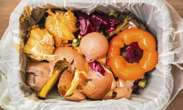 desechos orgánicos para reciclar