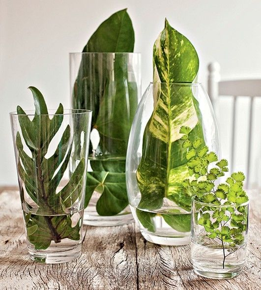 hojas grandes dentro de recipientes transparentes
