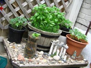 hierbas en macetas 300x225 Secado y congelado de Hierbas aromáticas y condimentos