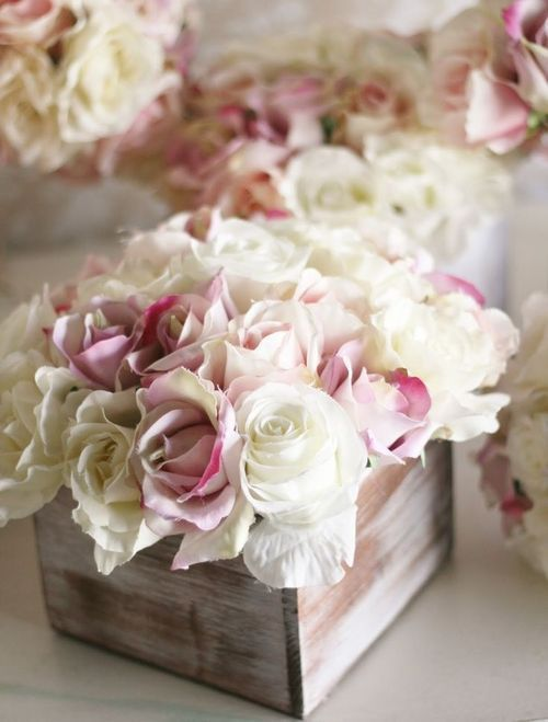 perfumar con rosas