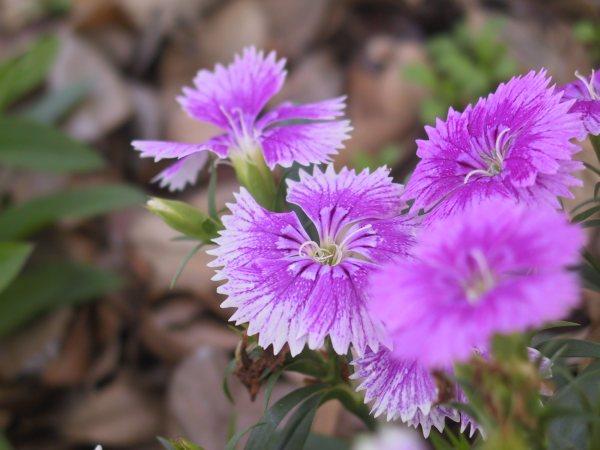 Flores que florecem o ano todo v rias - Plantas exteriores todo el ano ...