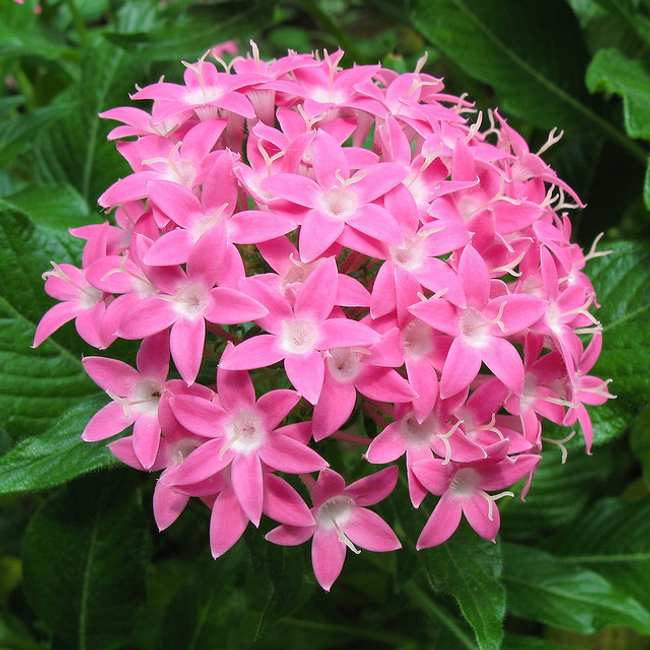 plantas que florecen todo el año