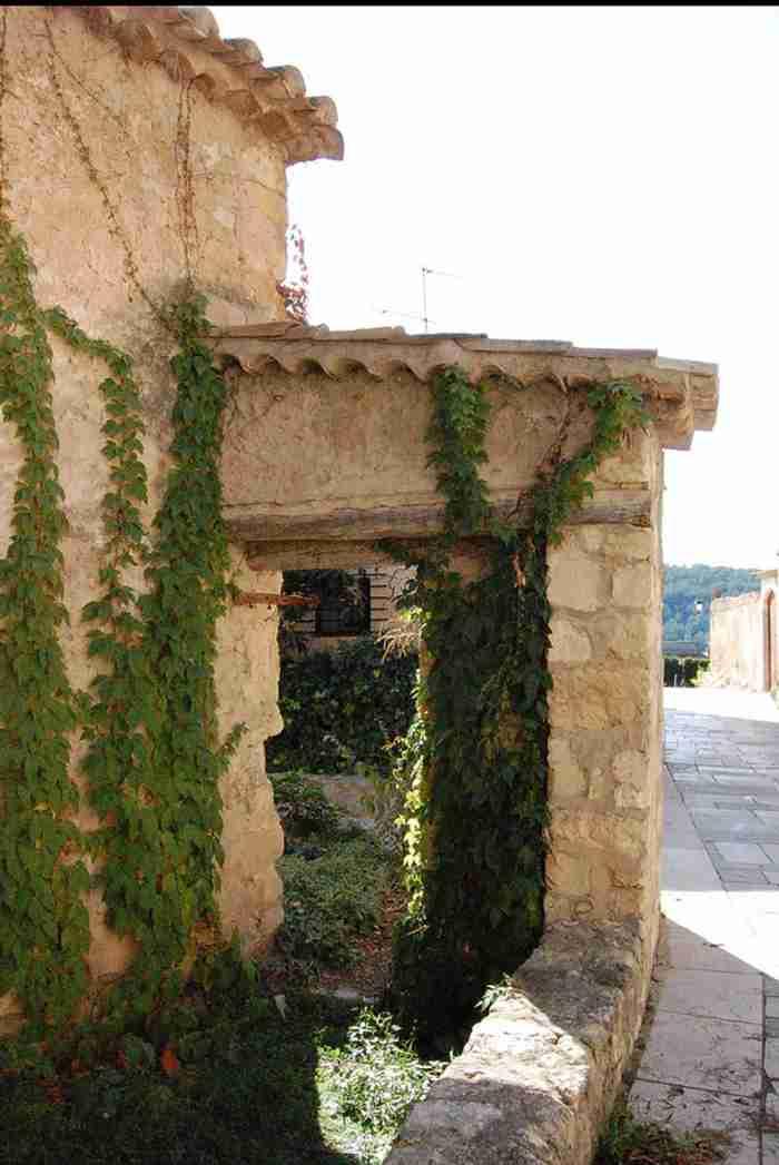 plantas-trepadoras-muro